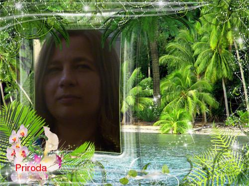 Džunglový fotorámeček